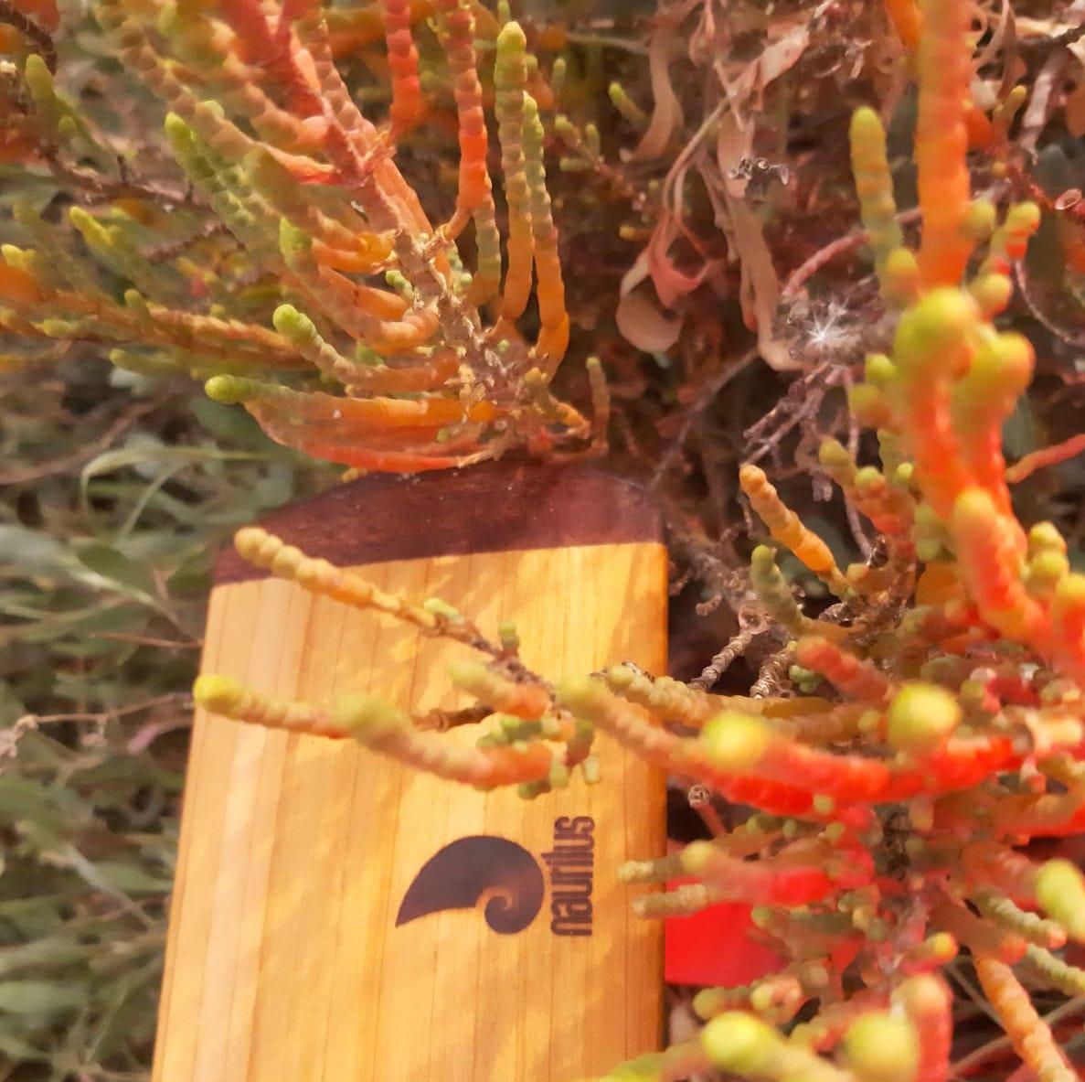 palas groenlandesas nautilus flores 4